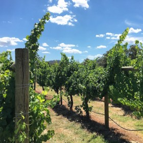 Vineyards - Girls weekend in the Yarra Valley
