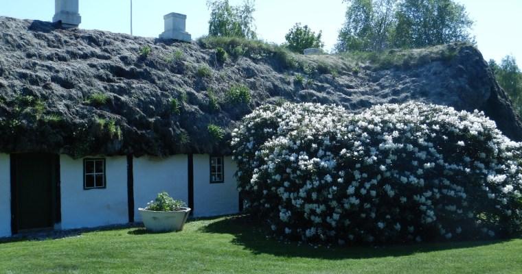 Die 7 Wunder Nordjütlands – Die Tangdachhäuser von Læsø