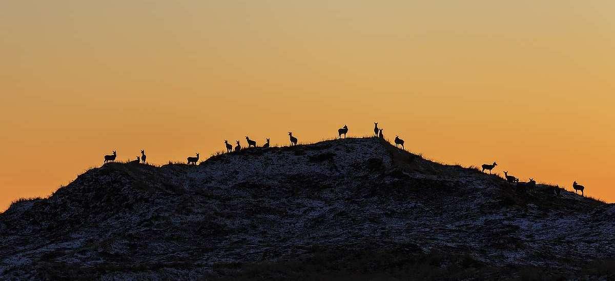 Dänemarks 5 Nationalparks: Der Nationalpark Thy