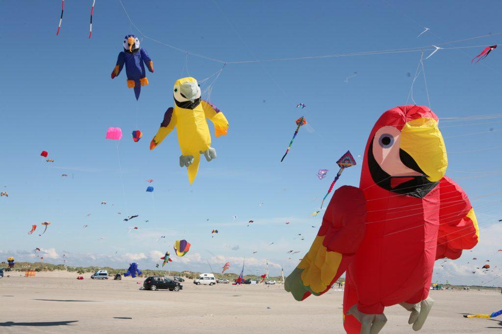Drachenfestival auf Fanø - im Vordergrund ein roter Papagei