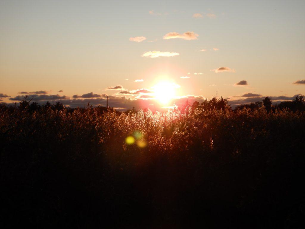 Naturschutzgebiet Grenen im Gegenlicht