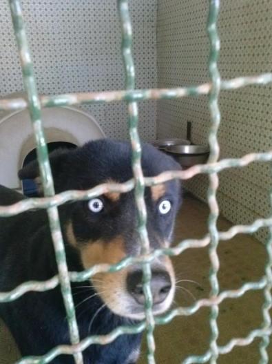A Saviano se adotti un cane risparmi sulla Tarsu