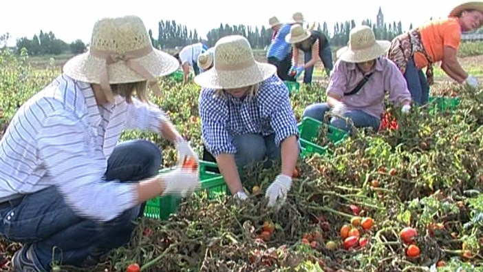 Agrijob, il portale per trovare lavoro in campagna è on line