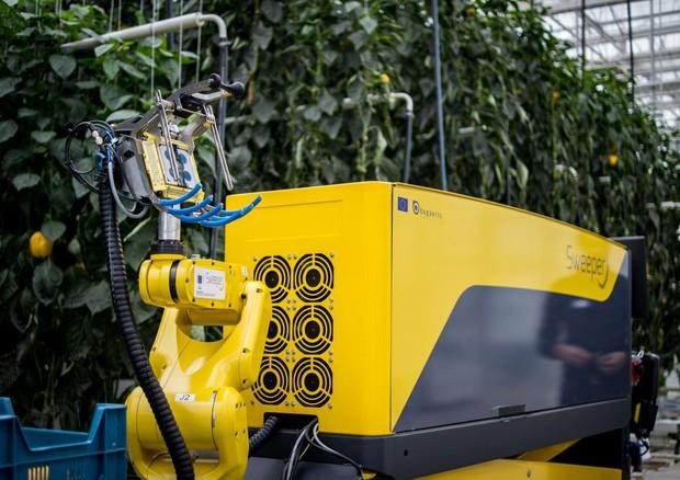 Il robot Sweeper in azione durante un processo di raccolta di prova in un vivaio