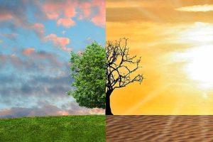 La Terra sta perdendo la sua fonte primaria di vita. Quale sarà la fine della nostra agricoltura mondiale?
