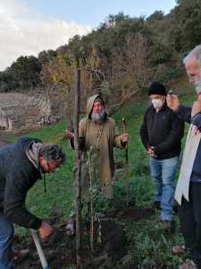 Piantati 17 alberelli a Godrano con Fratel Biagio