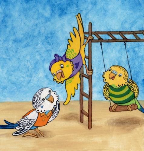 Parakeet Playground
