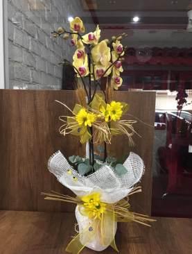 İki Dallı Sarı Orkide