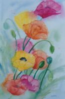 Poppy Fever - Watercolour 54 x 35.5 cms