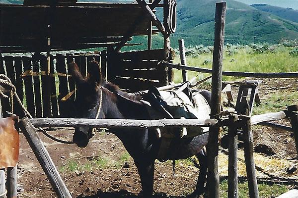 My friend, the donkey