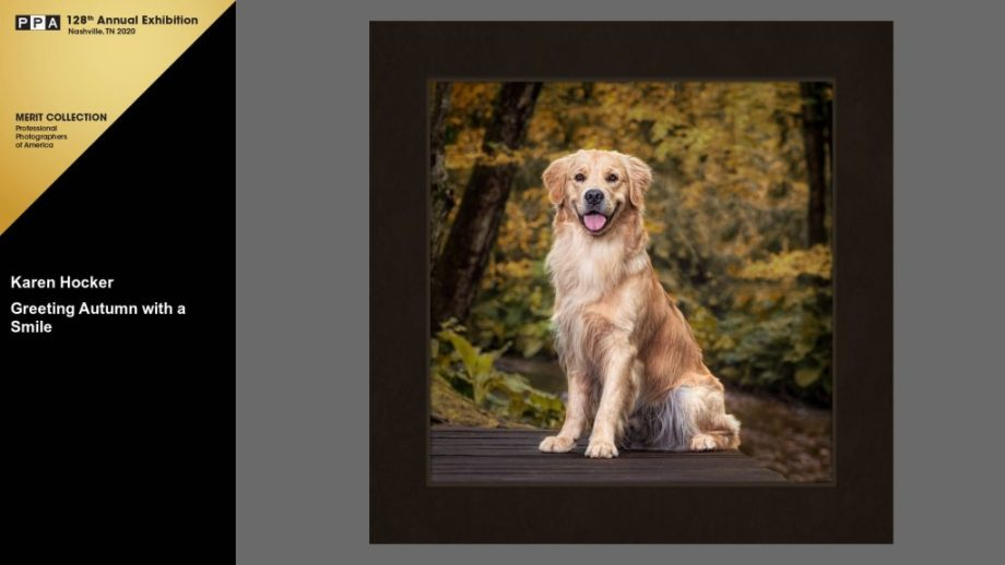 Golden Retriever sitting on a deck in the woods surrounded by trees with yellow autumn leaves