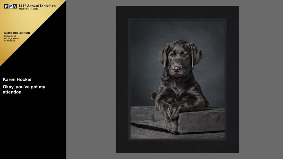 Black Labrador Retriever puppy lying on a wooden box, paws hanging over the edge, looking at the view