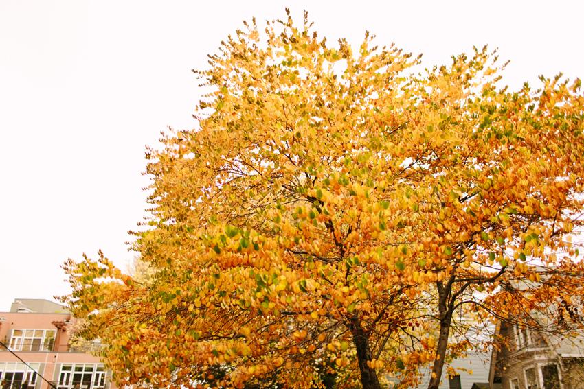 fall022