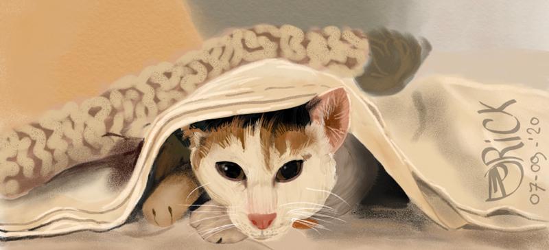 Kat dieren