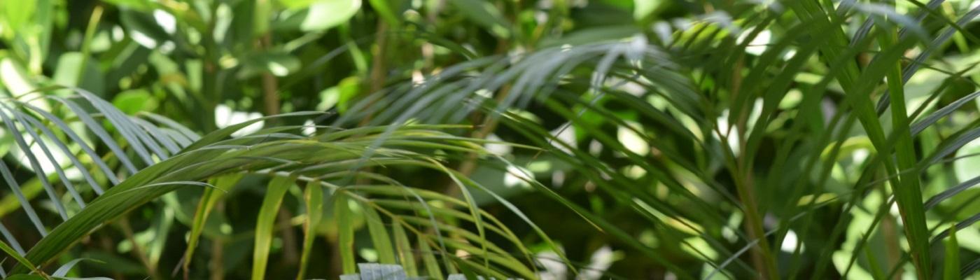 Image décorative : feuilles de fougères entremêlées