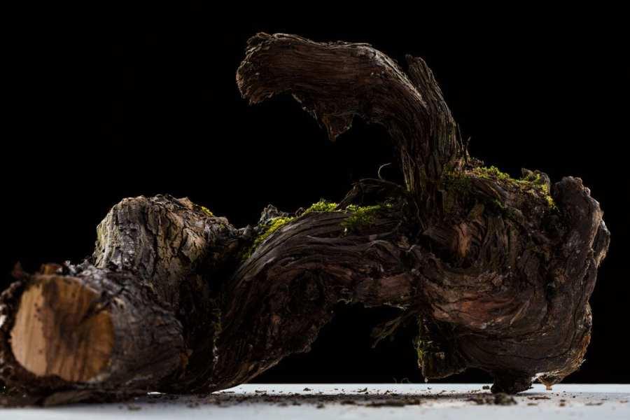 Photos en studio de cep de vigne