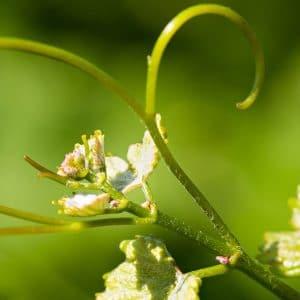 Vin-bio fleur