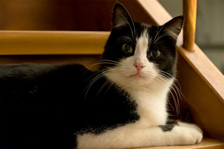 Roméo le chat