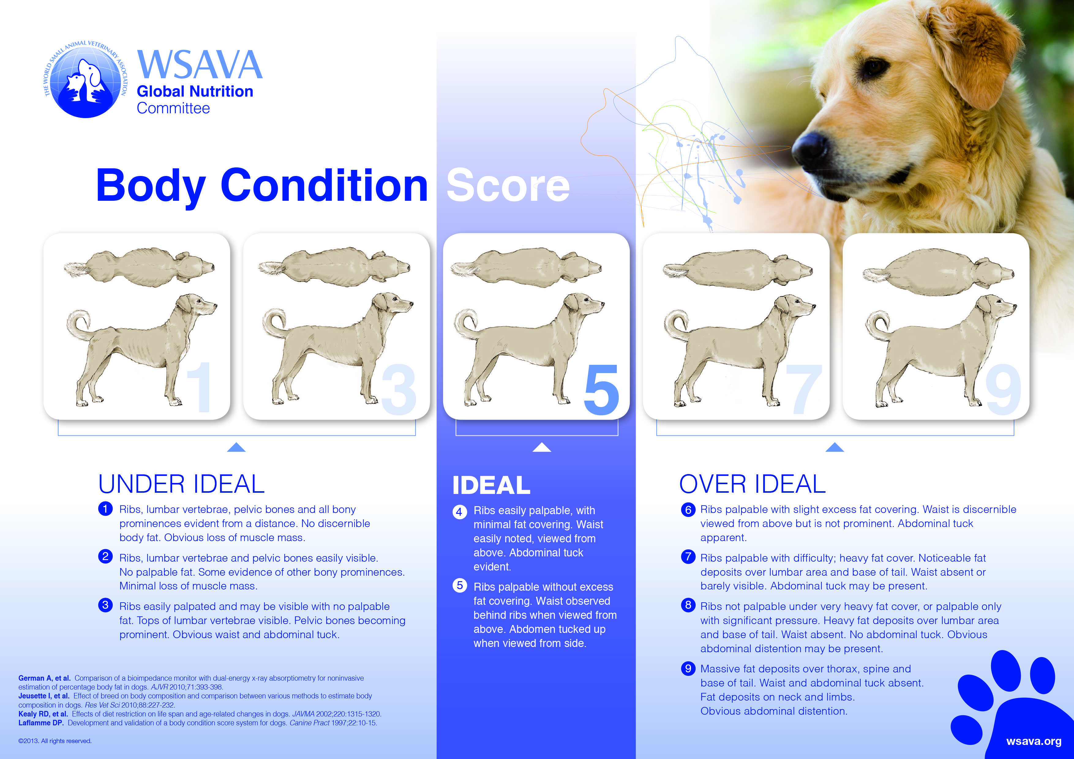 Healthy Dog Weight And Dog Obesity
