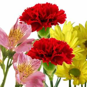 Cut Fresh Flowers for Dish Gardens