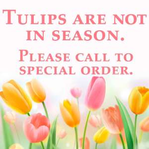 Tulips are out of Season