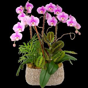 Elegant Triple Stem Orchid Garden