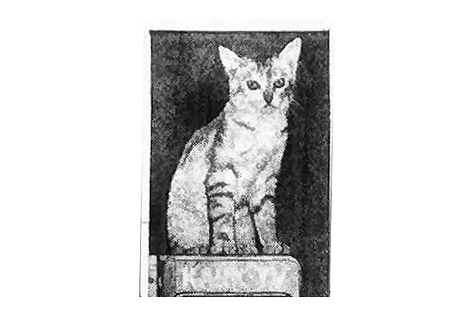 KARK Kitty Hurricans, 1955_6655990018567325777