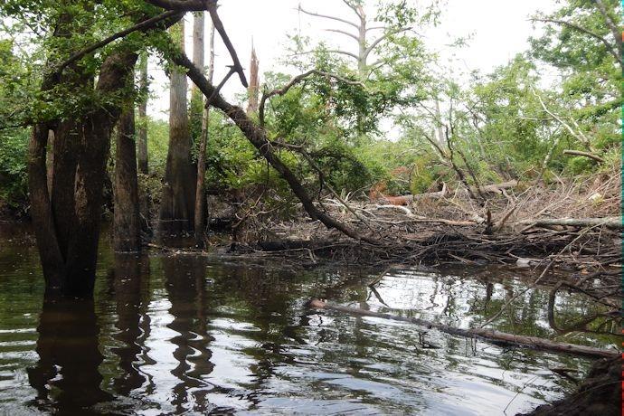 Palarm Creek Blockage between Lake Conway Dam and Grassy Lake Road Bridge_-3574071390372608494