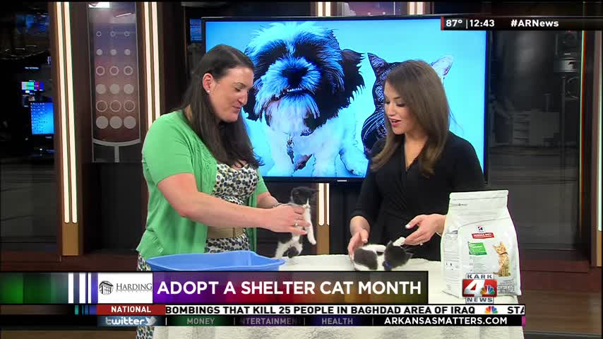 June is National Adopt a Shelter Cat Month_20160609180806