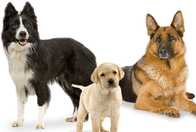 Dogs_1500577272446.png