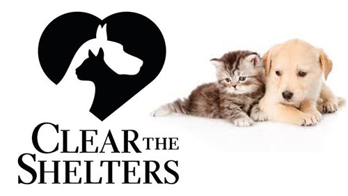 Save a life, help Clear the Shelters Aug  17 | KARK
