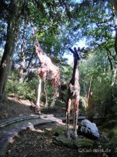 Hansapark Jeep Safari Giraffen
