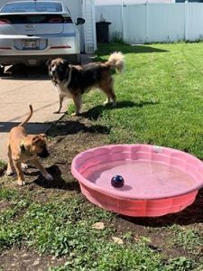 A dog and a puppy outdoors, by a small pink kiddie pool