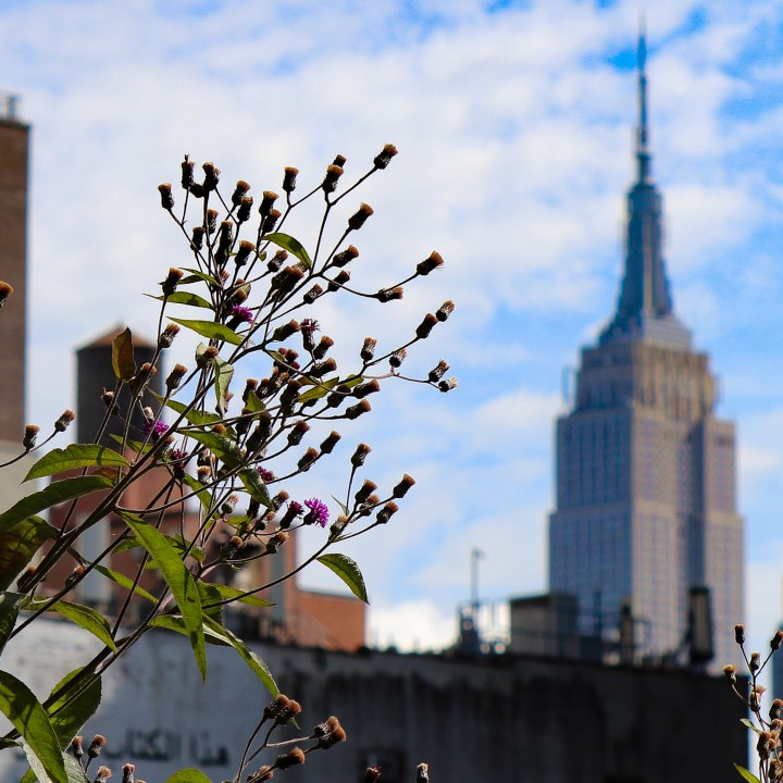 A close up shot of some flowers on the High Line with the Empire State Building in the background.