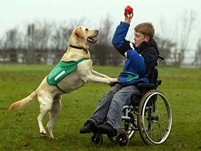 service dog wheelchair