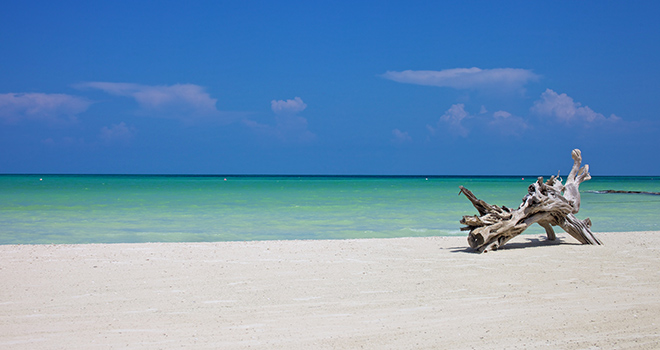 Tour Holbox  Discovery