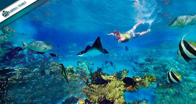 Tour Cozumel Snorkeling