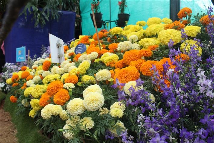 Floriculture in Karnataka
