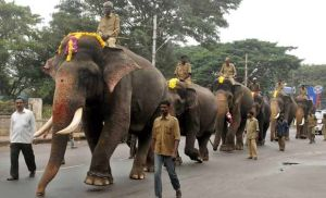 Gajapayana – Elephant March During Dasara