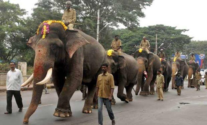 Elephants during Dasara 2013