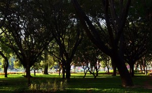 Cubbon Park – A Landmark at the Heart of Bengaluru
