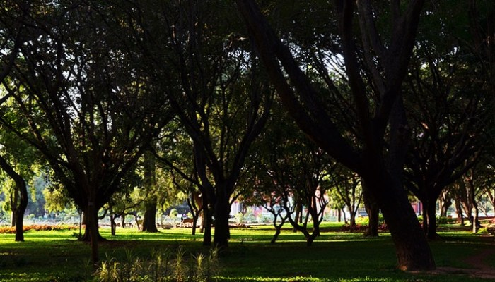 Must-visit Parks in Bangalore