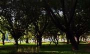 Cubbon Park – A Landmark at the Heart of Bengaluru