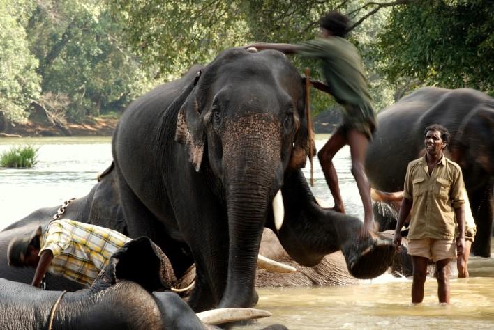 Dubare Elephant Camp. Photographer Dhruvaraj S