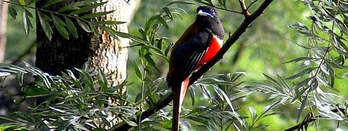 Birds at Swarga Resort, Coorg