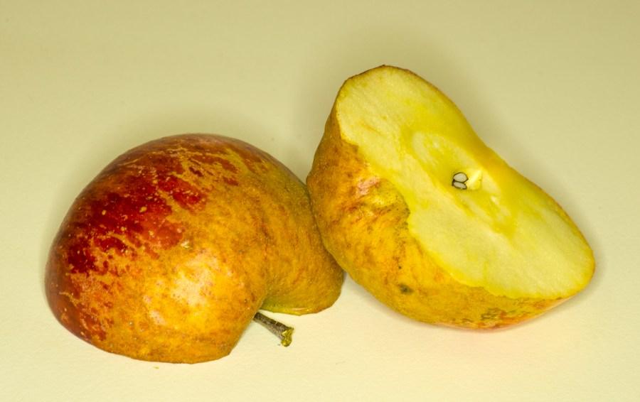Apfel mit Forstring - Foto Josef Gallaun