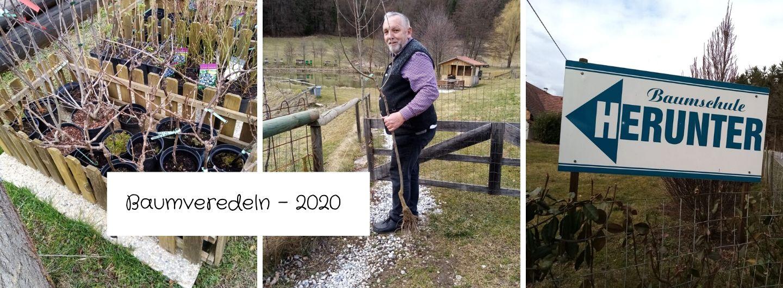 Baumveredeln - 2020