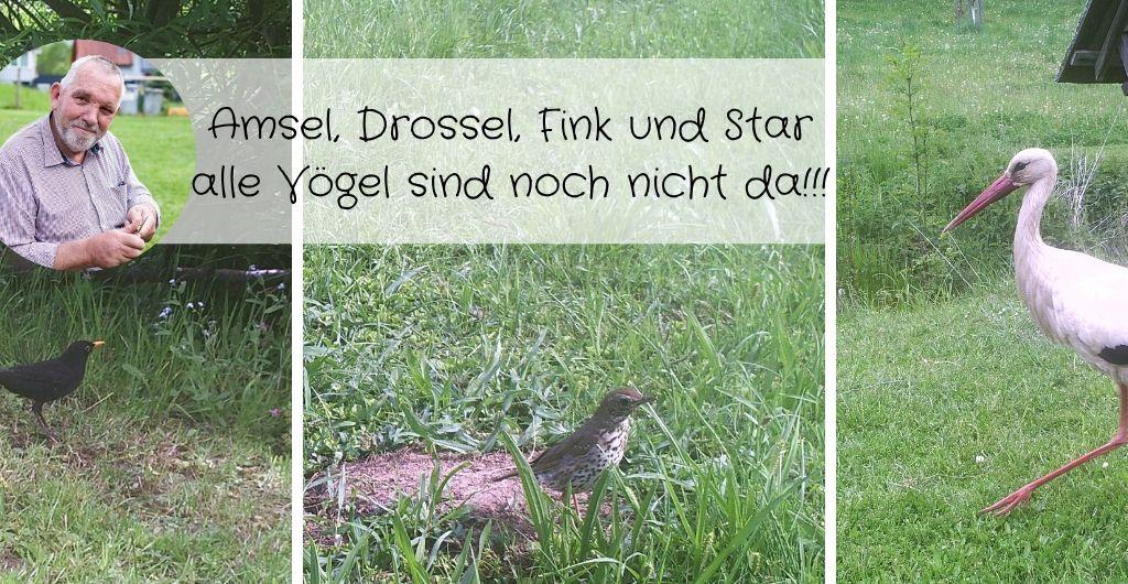 Vogel-Amsel, Drossel, Fink und Star, alle Vögel sind noch nicht da!!!-Titelbild1440x530