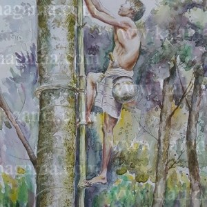Online, Art, Art Gallery, Online Art Galley, Sri Lanka, Karunagama, Watercolor, Water Colour, Toddy Industry, Toddy in Sri lanka, Sri lankan People, Tree climber, Tree Climber Paintings, Sri lanka paintings,