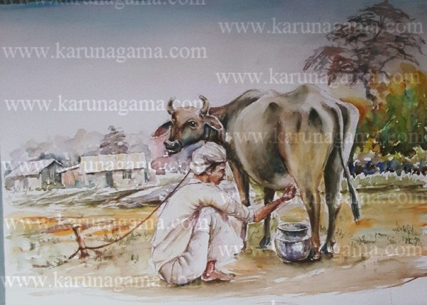 Online, Art, Art Gallery, Online Art Galley, Sri Lanka, Karunagama, Watercolor, Water Colour,Sri lankan cows, Sri lanka people, Sri lanka paintings